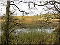 NT5027 : Whitmuir Loch by Richard Webb