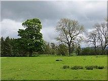 NU0012 : Grass field, Prendwick by Richard Webb