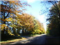SK9109 : Autumn along Barnsdale Avenue by Marathon