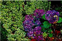 L9984 : Westport - New(port) Road - Hotel Westport - Schrubs & Flowers by Joseph Mischyshyn