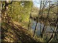 SK6213 : River Wreake in autumn by Alan Murray-Rust