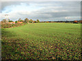 TG2705 : Fields south of Kirby Bedon by Evelyn Simak