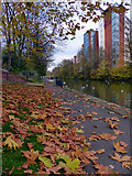 SK5803 : Autumn leaves along the mile straight by Mat Fascione