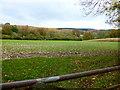SU8315 : Downland north of Chilgrove by Shazz