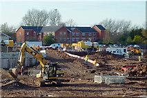 SO9098 : Regeneration site south of Chapel Ash, Wolverhampton by Roger  Kidd