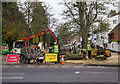 SP3166 : Tree felling in Beauchamp Avenue by David P Howard
