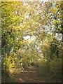 ST6878 : Bridleway near Parkgate Farm by Derek Harper