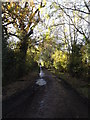 TM2693 : Rookery Lane, Topcroft by Geographer