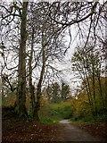 TQ1372 : Conker trees in Crane Park by Stefan Czapski