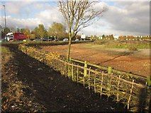 ST6677 : Laid hedge, Lyde Green roundabout by Derek Harper