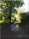 TM2692 : Rookery Lane, Topcroft by Adrian Cable