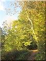ST6577 : Path, Leap valley by Derek Harper