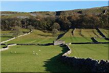 SD9772 : Fields near Kettlewell by Ian S