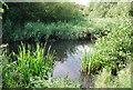 TQ5275 : River Cray by N Chadwick