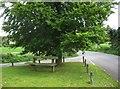 SO7595 : A seat under a tree, Main Street, Worfield, Shrops by P L Chadwick