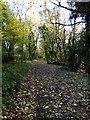 SU8113 : Footpath along edge of Wildhams Wood by Shazz