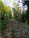 SU8113 : Footpath along edge of Wildhams Wood by Shazz