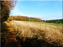 SU8113 : Field by Wildhams Wood by Shazz