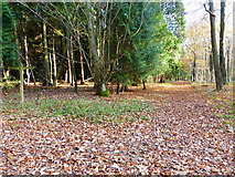 SU8113 : Track in Wildhams Wood by Shazz