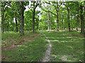 SU2207 : Path in Backley Inclosure by Hugh Venables
