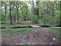 SU2306 : Tree felling, North Oakley Inclosure by Hugh Venables