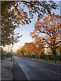TQ1371 : Hanworth Road, Hampton, in December by Stefan Czapski