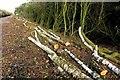 SP5821 : Tree clearance by the railway by Steve Daniels