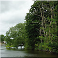 SO8163 : Trees by the River Severn south-west of Shrawley, Worcestershire by Roger  Kidd