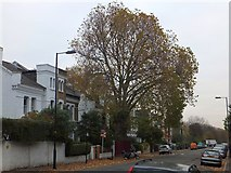 TQ2976 : Tree and houses in Bromfelde Road, Clapham by David Smith