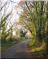 SY3396 : Monkton Wyld Lane by Derek Harper