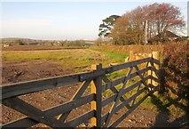 SX3258 : Field west of Trerulefoot by Derek Harper