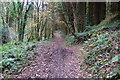 SX3057 : Footpath through Bake Wood by jeff collins