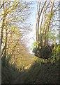 SX3457 : Ash tree below Old Treboul by Derek Harper