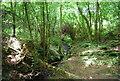 TQ3830 : Woodland stream, Hang Wood by N Chadwick