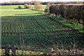 TL0244 : Hedgerow towards Kempston Hardwick by Philip Jeffrey