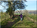NY7814 : Bridleway north of Musgrave Lane by John Darch