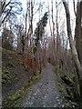 TQ1411 : South Downs Way, through Chalk Pit Wood by PAUL FARMER