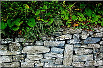 M2208 : Ballyvaghan - Green Plants above Stone Wall by Joseph Mischyshyn