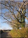 SX3158 : Trees near Bake by Derek Harper