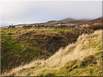 NO2006 : South-east slope of West Lomond by Rob Burke