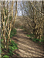 SS8577 : Path to the dunes from Wig Fach by eswales