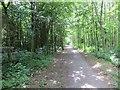NZ3356 : Path passing Washington Wetland Park by Richard Webb