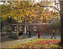 SX9292 : Autumn leaves, Bedford Street, Exeter by Derek Harper