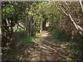 SS8477 : Public footpath in woodland by Wig Fach by eswales