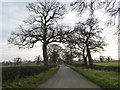 SJ7863 : Moorhead Lane [2] by Christine Johnstone