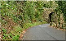 J4681 : Winter road, Crawfordsburn Country Park (1) by Albert Bridge