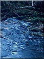NY3804 : Heron in standing in Stock Ghyll by Graham Robson