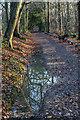 TQ2896 : Church Wood, Trent Park, Cockfosters, Hertfordshire by Christine Matthews