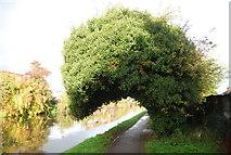TQ1883 : Grand Union Canal Walk by N Chadwick