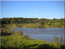 SK5852 : Pond near Sansom Wood by Richard Vince